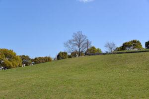 緩やかな傾斜の丘