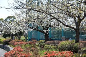 長浜公園管理センター前