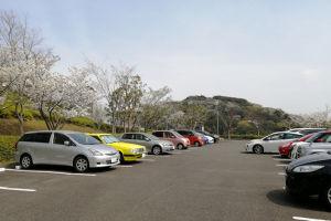 湘南国際村西公園駐車場の桜