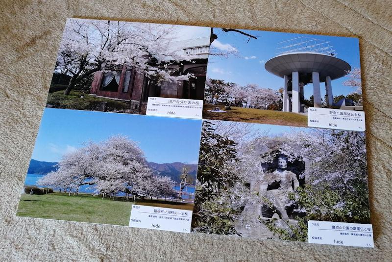 京急百貨店「さくらの写真募集」で