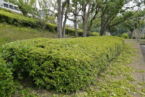 新緑の湘南国際村西公園