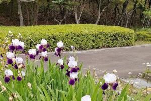 西公園の草花